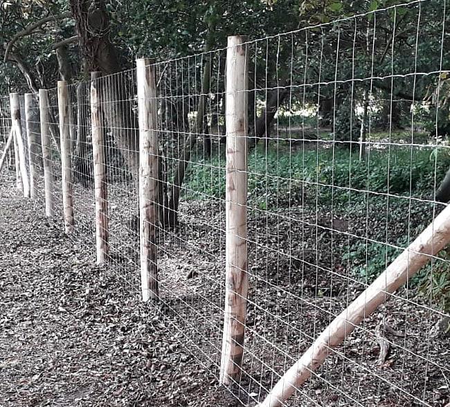deer-netting-fencing-kent